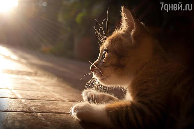 Милашка-кот