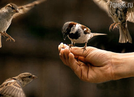 День Птиц в Тимирязевском музее