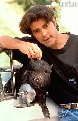 Джордж Клуни и его хряк Макс. 1989 год