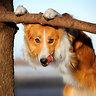 Да и на фото собаки всегда получаются лучше!
