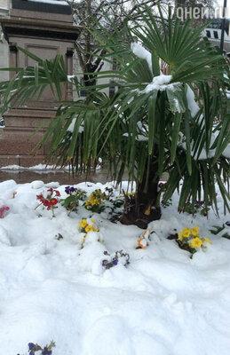 «Невероятный Лондон! Цветы и пальмы в снегу. Англичане не выходят на улицу — боятся поскользнуться и умереть или замерзнуть) Говорят, такой погоды в Лондоне не бывает!)»