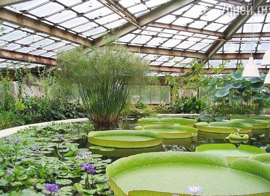 Любители ботаники и активного отдыха на свежем воздухе могут отправиться в Ботанический сад