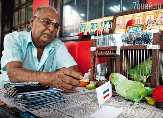 Попугай Мани из Сингапура не смог составить достойную конкуренцию осьминогу Паулю: птичьи прогнозы оказались неверными. Чемпионом, в частности, он назвал... голландцев