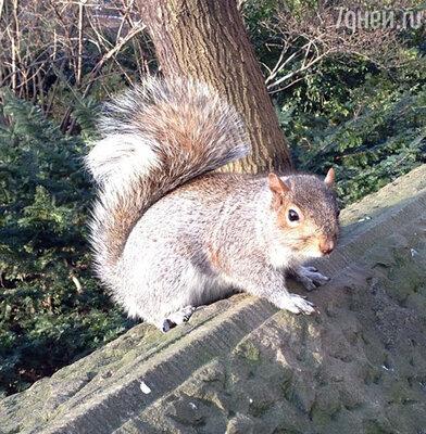 «Хотел забрать ее с собой, но решил, что в Москве не поймут белку на плече)))» — прокомментировал Джиган свое посещение парка