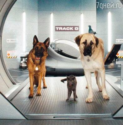 Кадр фильма «Кошки против собак: Месть Китти Галор»