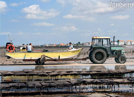 По убранным плантациям можно передвигаться на таком вот тракторе — его колеса точно не увязнут в липкой океанской грязи