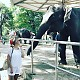 Ксения Новикова покормила слона бананами