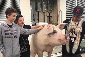 Наташе Королевой подложили свинью!