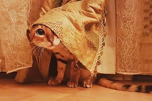 Кошка Анны Чуриной умеет играть в прятки