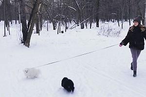 ВИДЕО: Анастасия Макеева на прогулке со своими питомцами