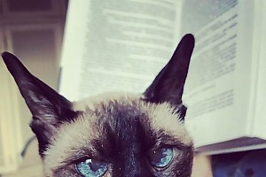 Оксана Фандера показала удивительного кота