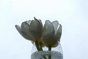 Оксана Фандера и ее красивые зимние цветы