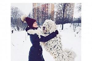 Саша Савельева и удивительный пес