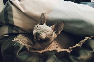 Кошка Влада Лисовца проснулась не в лучшем настроении