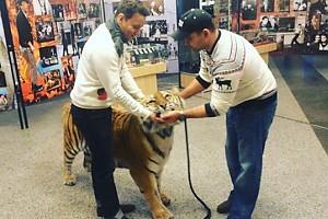 ВИДЕО: Александр Олешко решился поцеловать тигра