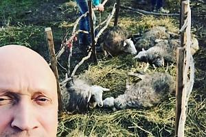ВИДЕО: Гоша Куценко от скуки побеседовал с овцами